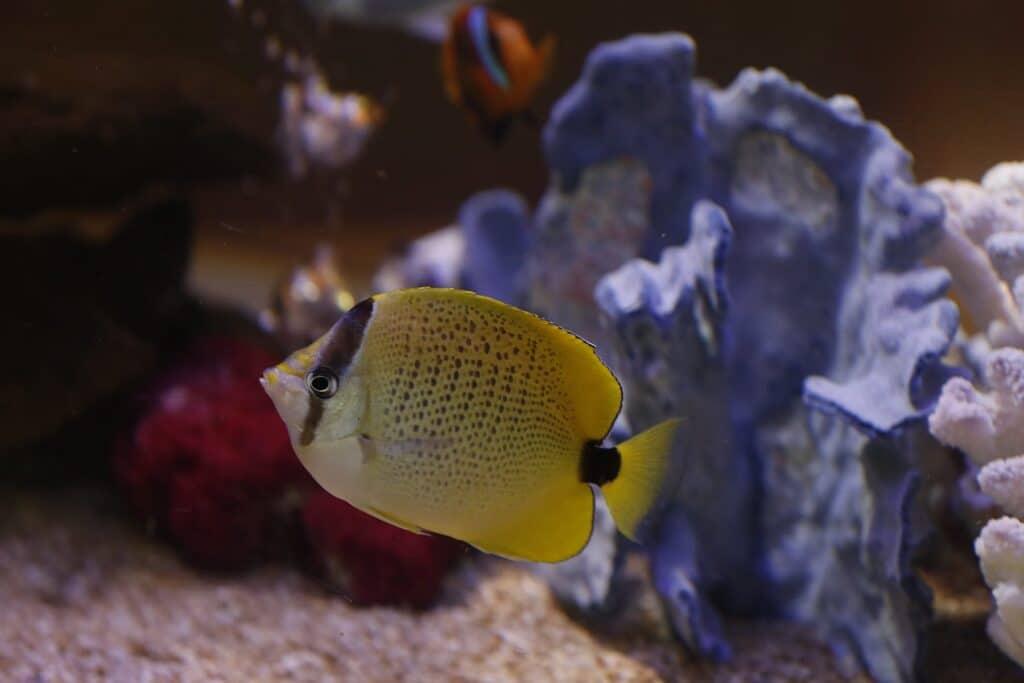 Pretty Fish at North Seattle Dental